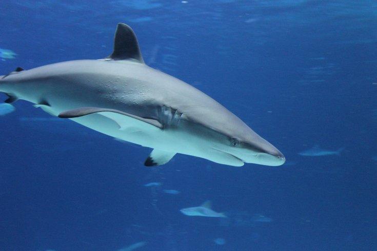 Adventure Aquarium shark