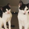 Pet of the Week: Thelma and Louise