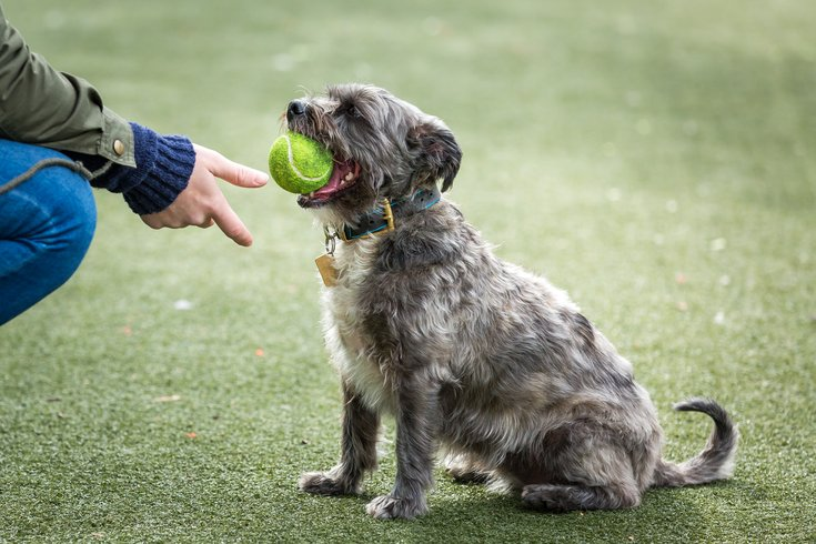 Carroll - Dogs