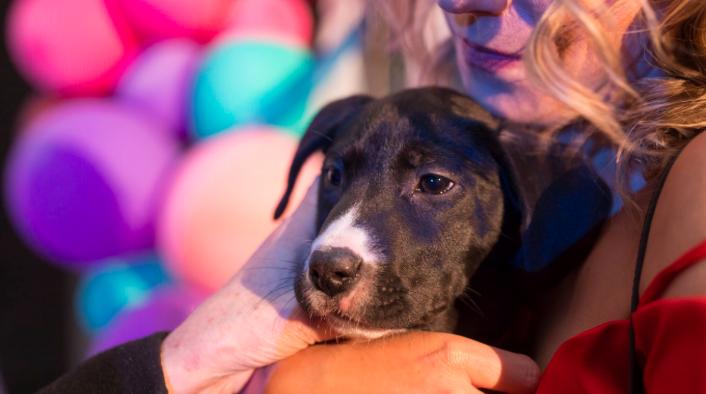 Morris Animal Refuge's annual Fur Ball