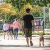 Stock_Carroll - Dog Walking