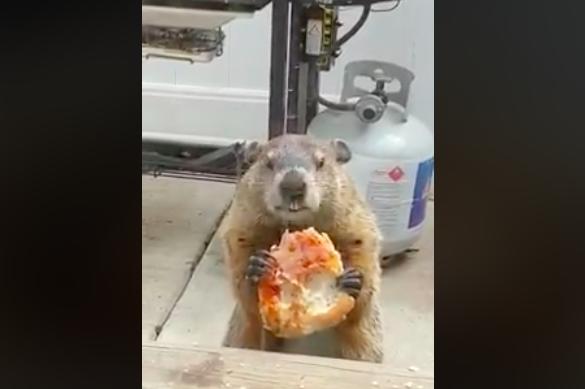 Pizza Groundhog Kimmel
