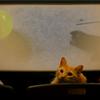 Cats film festival