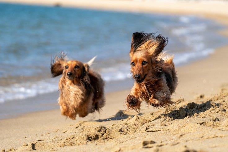 Doggie Dash in Wildwood