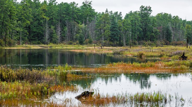 Pine Barrens trees destroyed