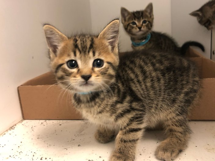 80921 kittens in ACCT Philly.jpeg