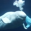 06022015_Whale_AP