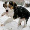 Winter Pets