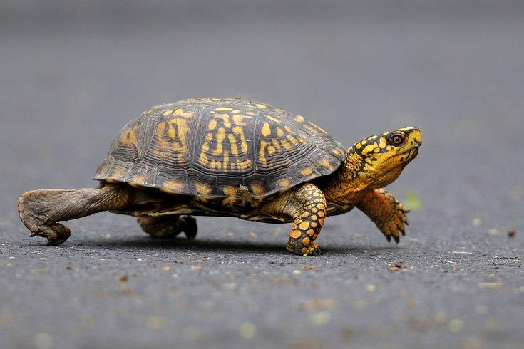 07012015_Turtle_AP