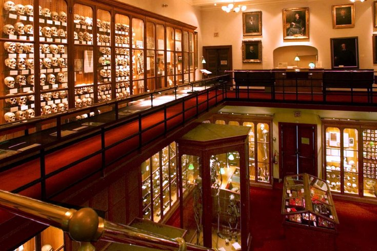 Inside the Mutter Museum