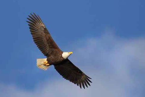 Bald Eagle State Park A Pennsylvania Located Bellefonte Lock Haven And