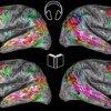 Brain Maps Berkeley Reading Books Listening Audiobooks study