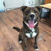 Pet of the Week: Michael Buble