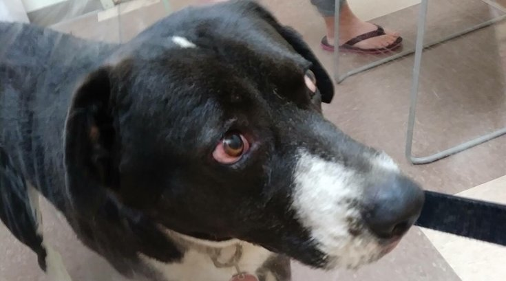 Dog Buddy Pennsylvania