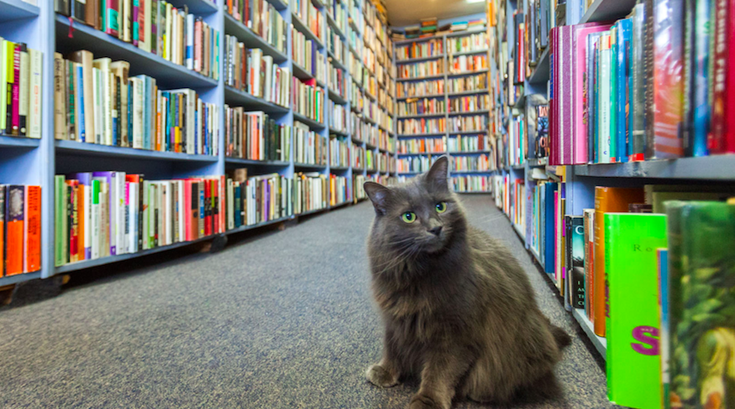 Cat in a bookstore