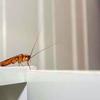 092116_Cockroach