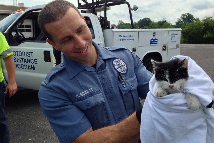 walt whitman cat rescued