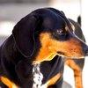 Lucky's Last Chance Great Wiener Dog Race happening in July