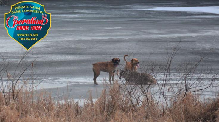 Dogs Deer Pennsylvania