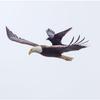 070215_EagleCrow
