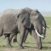 04102015_Elephant