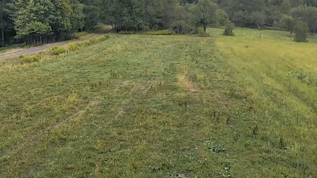 Watch Pennsylvania elk on live camera from the game