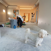 Dog standing in a room being remodeled