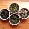 Green tea antibiotics