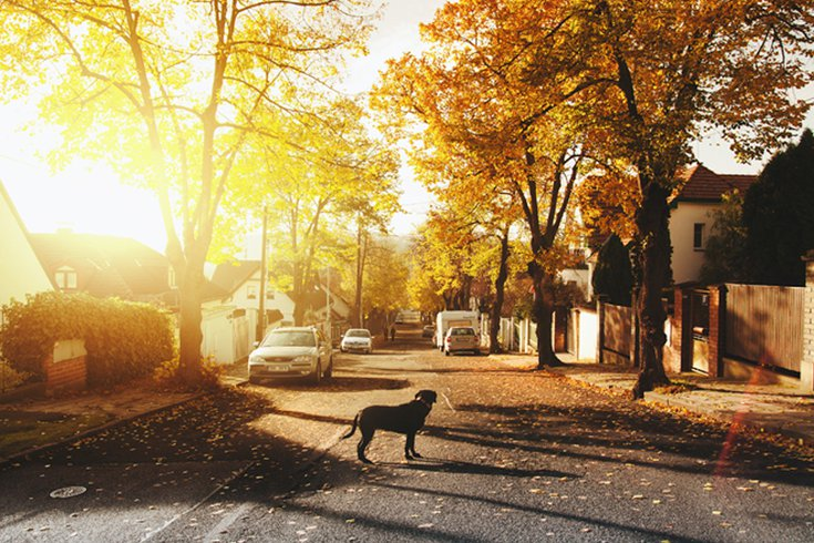 Residential Street with Dog