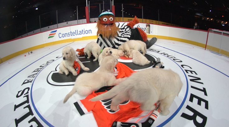 Gritty puppies hockey