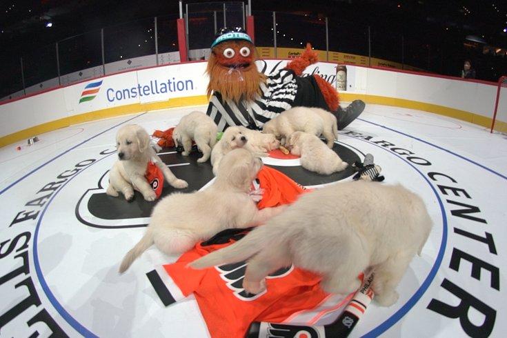 Gritty puppies hockey