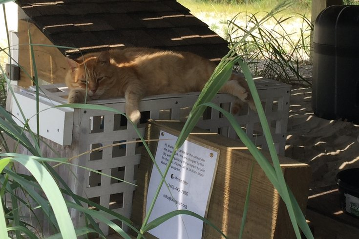 Meet the people who care for 100 'Boardwalk cats' at Jersey