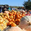 Various Pumpkins at Linvilla Orchards