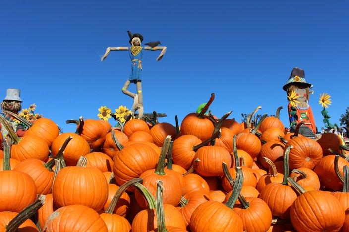 Pumpkinland at Linvilla Orchards