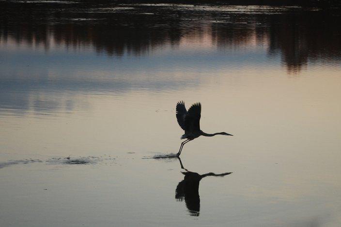 Limited - John Heinz National Wildlife Refuge Alliance for Watershed Ed