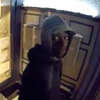 Mail theft Suspect