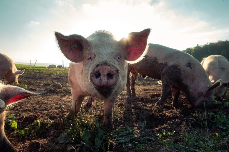 Organic Farms Don't Guarantee Animals Happiness