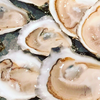close up of oysters