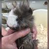 PETA Video