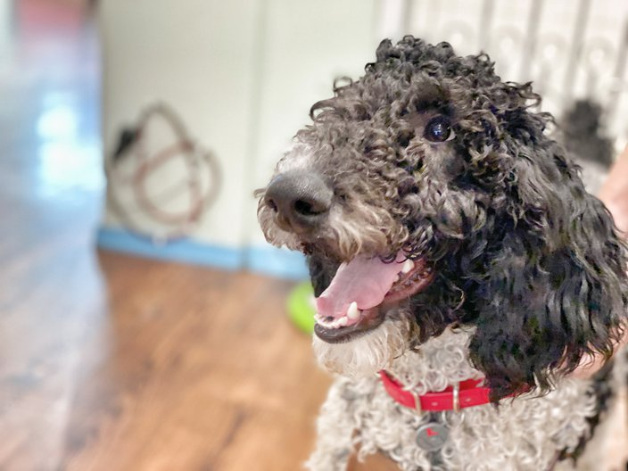 Pet of the Week: Bob Ross