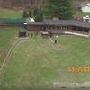 022516_SHARKpigeons