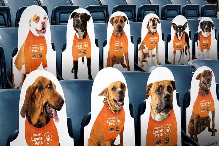 Philadelphia Union Dogs of Ben.jpg