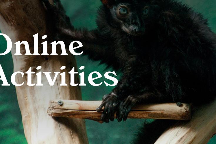 Philly Zoo Activities