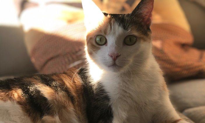Pet of the Week: Reese