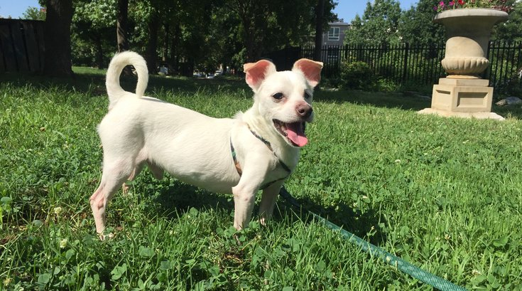 Pet of the Week: Old Glory