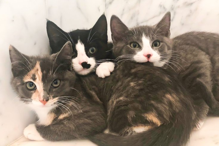 Pets of the week: kitty trio
