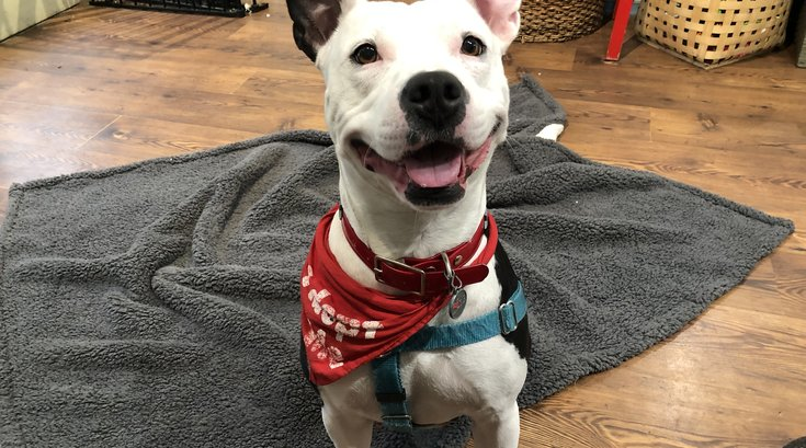 Pet of the Week: Babe