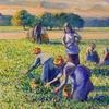 Camille Pissarro La Cueillette des Pois