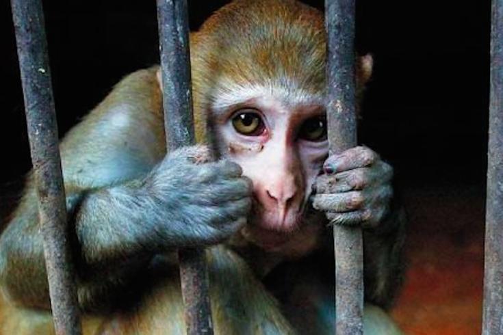 03042015_Monkey