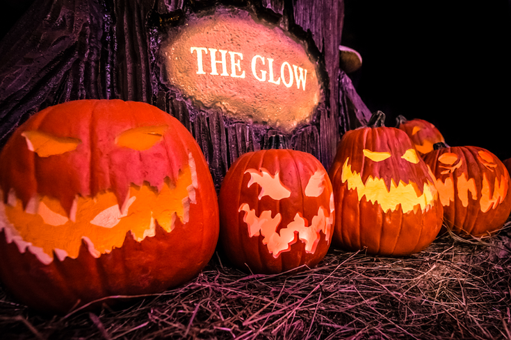 Pumpkins at The Glow